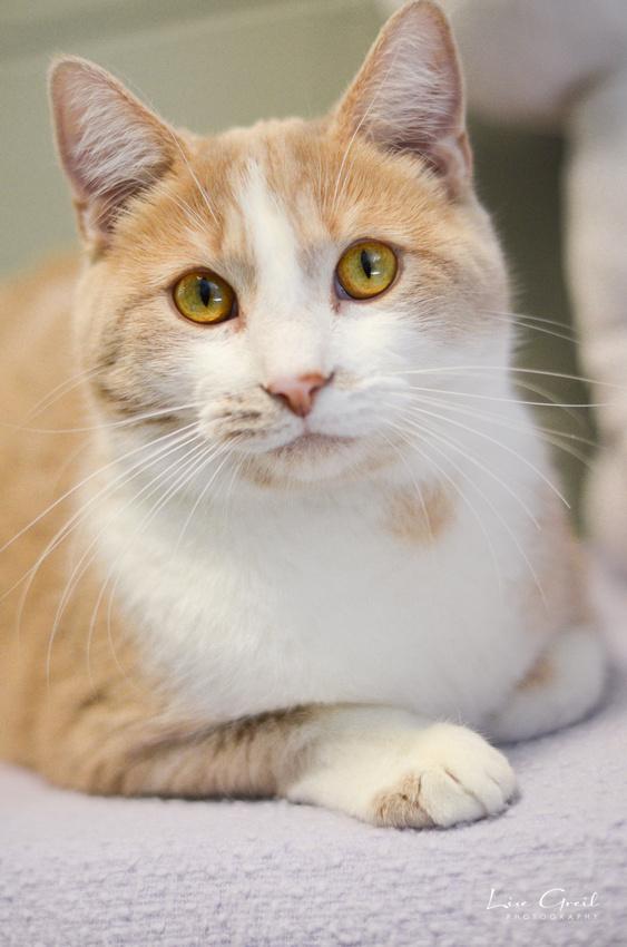 Bing Catsby